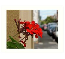 Red Flowers on a Window Ledge Art Print