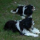 Rupert and Bonnie by BronReid