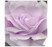 Lavander Rose 1 Poster