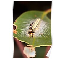 Caterpillar with Five Heads Poster