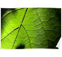 Macro leaf Poster