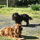 Rowley and Nell enjoying some winter sun by BronReid