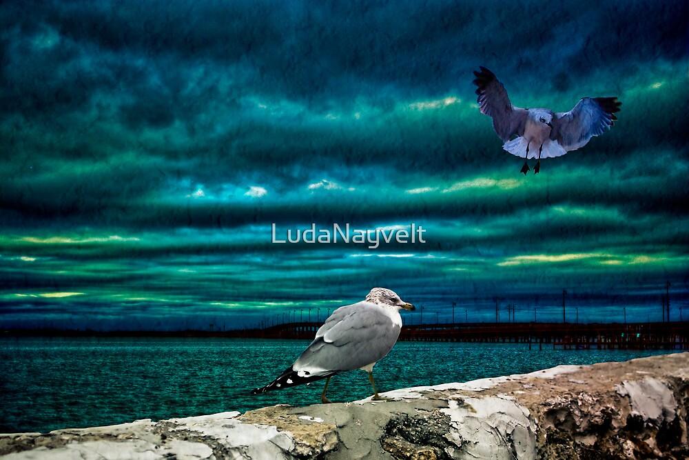 Gulls by LudaNayvelt