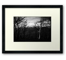 Marysville - Forest Framed Print