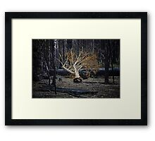 Marysville - Forest II Framed Print