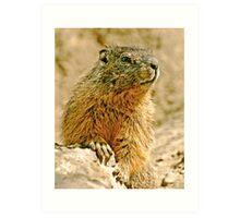 The Marmott Art Print