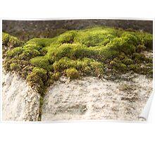 Miniature Landscape Poster