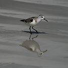 Sandpiper Reflection by Jane McDougall