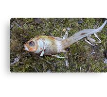 My goldfish has lost its color n°3 Canvas Print