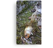 My goldfish has lost its color n°2 Canvas Print