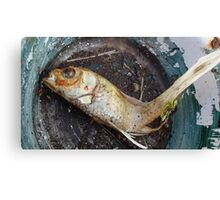 My goldfish has lost its color n°1 Canvas Print