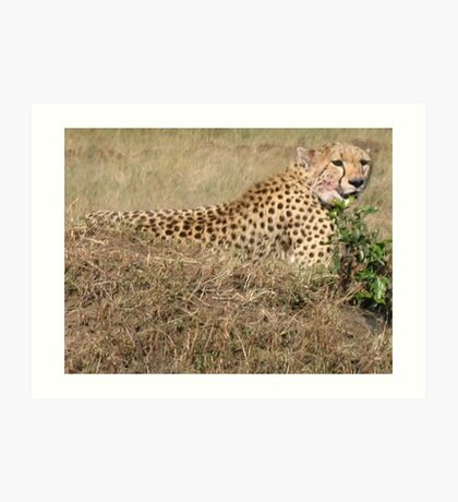 Cheetah - Masai Mara, Kenya Art Print