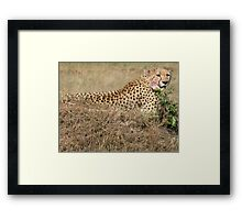 Cheetah - Masai Mara, Kenya Framed Print