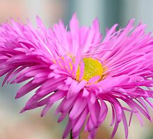 In the Pink by Ray Clarke