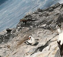 Galapagos Togetherness by Jane McDougall