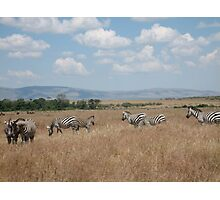 Zebra grazing - Masai Mara, Kenya Photographic Print