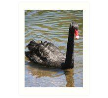 Black Swan (4505) Art Print