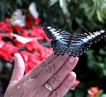 Penang Butterfly Garden by Janone