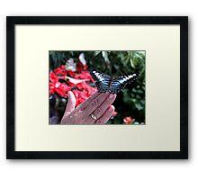 Penang Butterfly Garden Framed Print