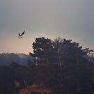 Bird of Prey by Christopher Burton