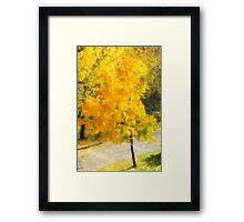 Autumn colorful maple Framed Print