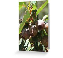 Gumnuts Greeting Card