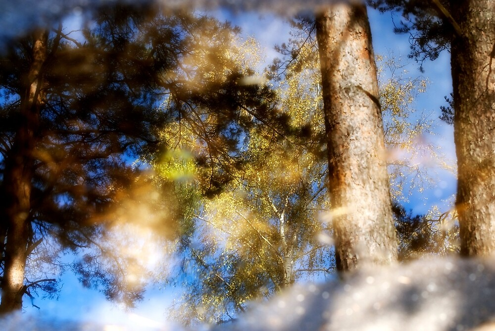 Tree reflection in the pool by igorsin