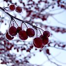 Winter Berries by Jace Hagar