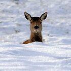 Oh, Deer! by Paul Cook