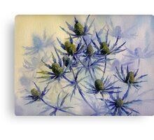 Sea Holly Canvas Print