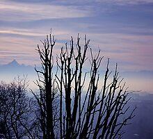 Blue velvet sunset by Stefano  De Rosa