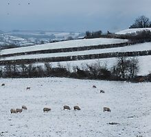 A Snowy Scene by Claire Elford