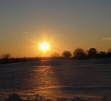 Winters Sun by Linda Miller Gesualdo