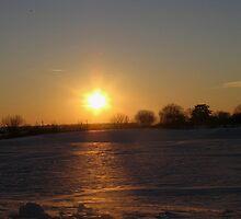Winters Sun by Linda Miller Gesualdo