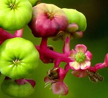 Poke Flower Changing To Berries by Jean Gregory  Evans