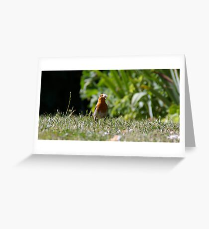 Robin eating bread Greeting Card