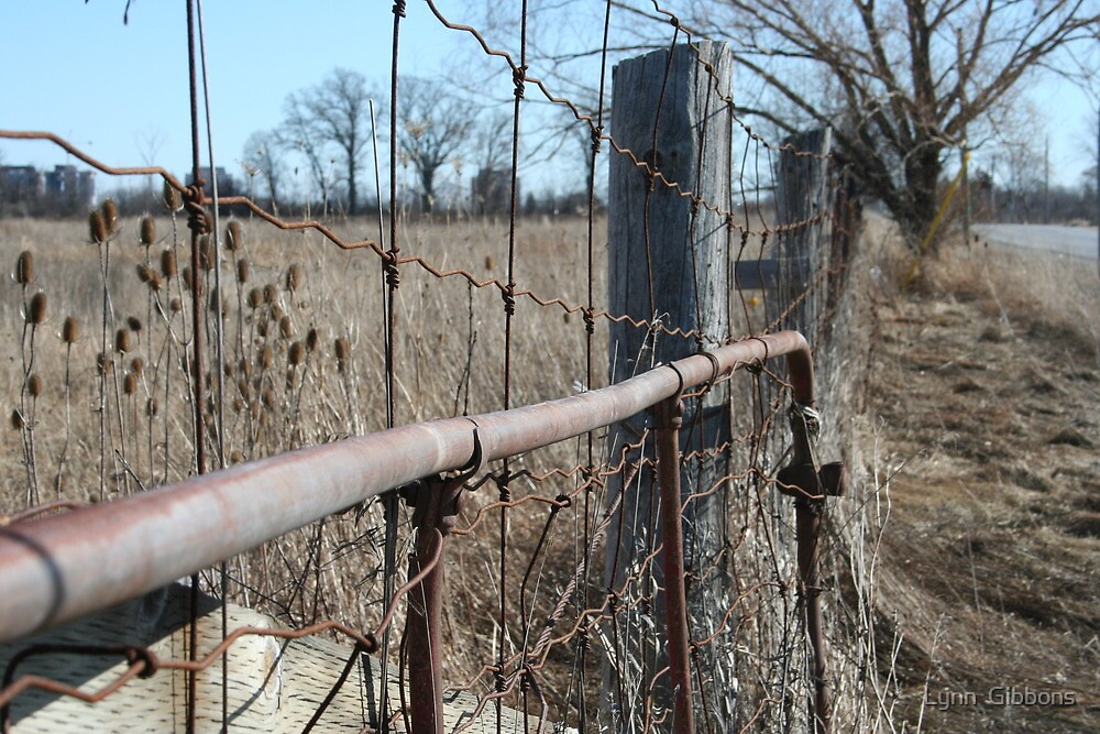 Old Fencing  by Lynn  Gibbons