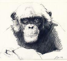 Ape by CarolinWeidemann