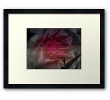 Shoreside Rose Framed Print