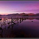 Purple dawn over Derwent water by Shaun Whiteman