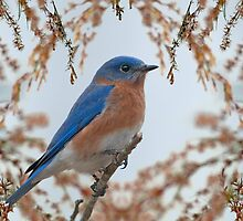 Bluebird Watch Guard by Bonnie T.  Barry