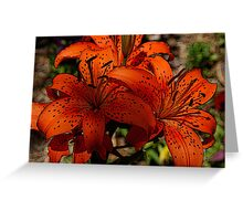 tiger lilies,farmstead,Kansas Greeting Card