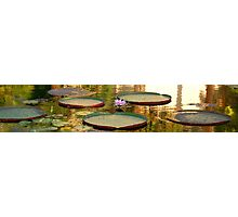 Lily Pads with Pink Flower Photographic Print