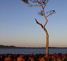 Mallabula Sunset by Jenni Tanner