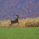 Buck by Cassy Greenawalt