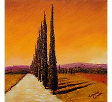Tuscan Cypress Road Photographic Print