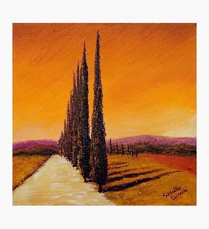 Tuscan Cypress Road Photographic Print