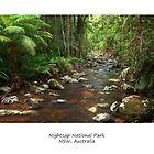 Rainforest Stream Art by Harley Kingston