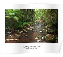 Rainforest Stream Art Poster