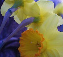 Daffys by NatureGreeting Cards ©ccwri